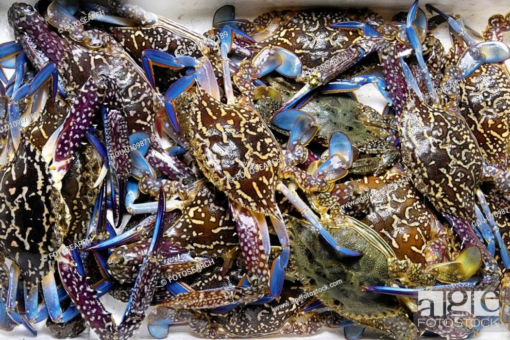 Stock Photo: Swimming crab.