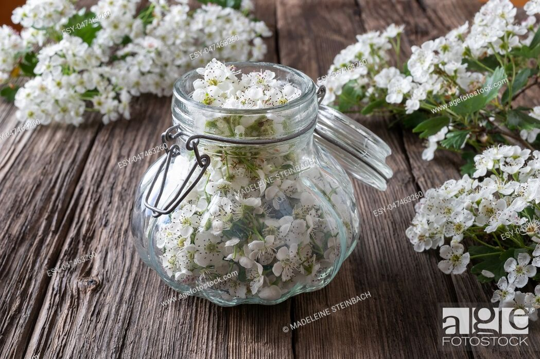 Stock Photo: Preparation of herbal tincture from fresh hawthorn flowers.