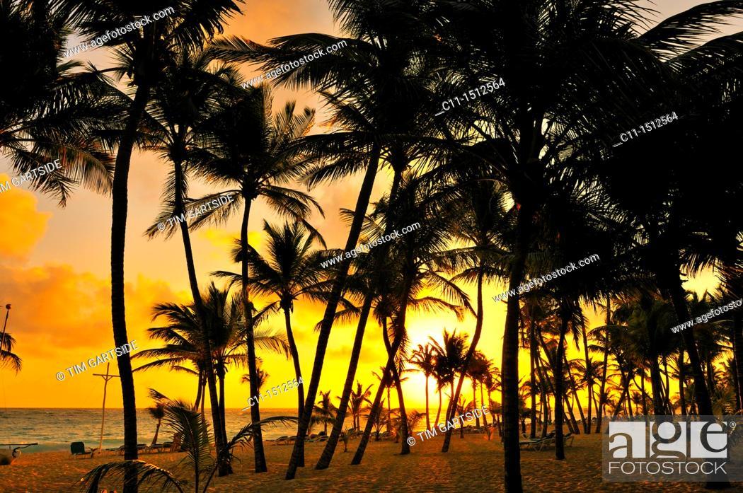 Stock Photo: beach, Riu Palace, hotel, Punta Cana, Dominican Republic, Caribbean.