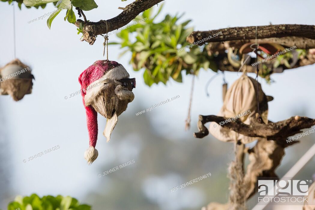 Photo de stock: Christmas decoration on branch.