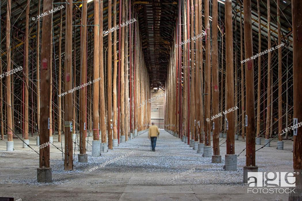 Stock Photo: A man walks through the largest rustically-built structure in the world called a stick shed, built in 1941 to store wheat, Murtoa, Victoria Austrlia.