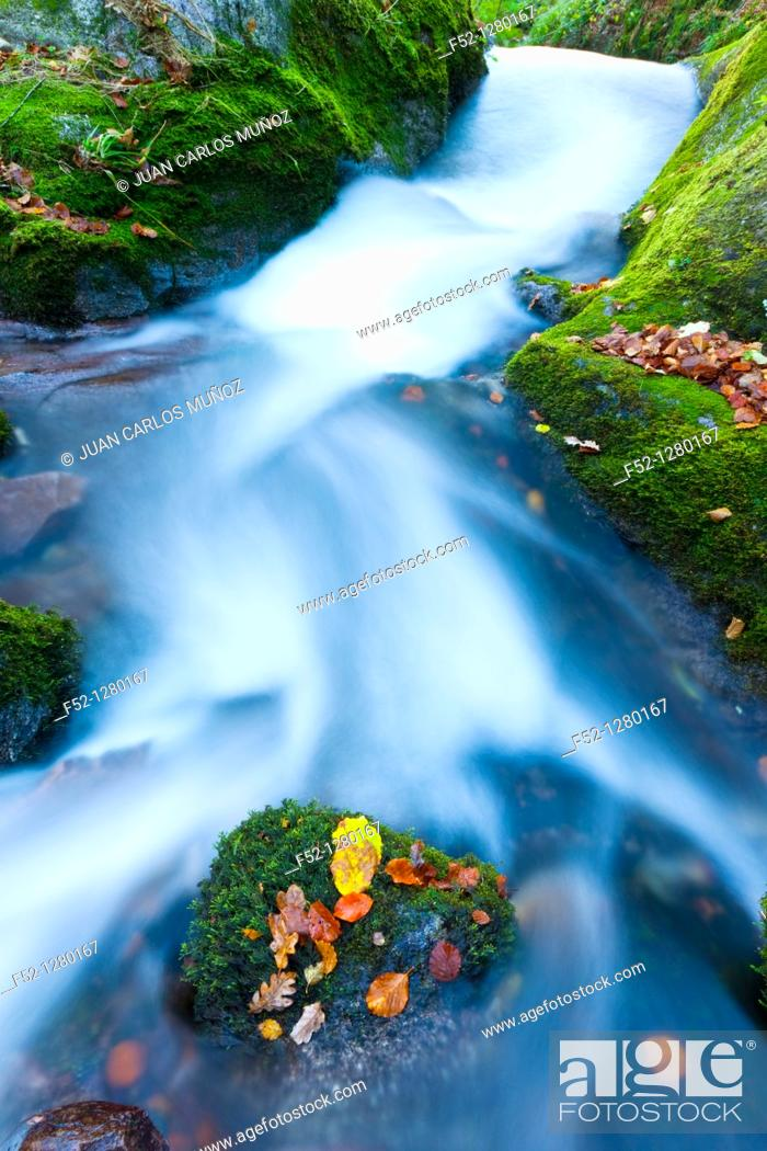 Stock Photo: Atlantic forest in autumn in the Saja-Besaya Natural Park, Cantabria, Spain.