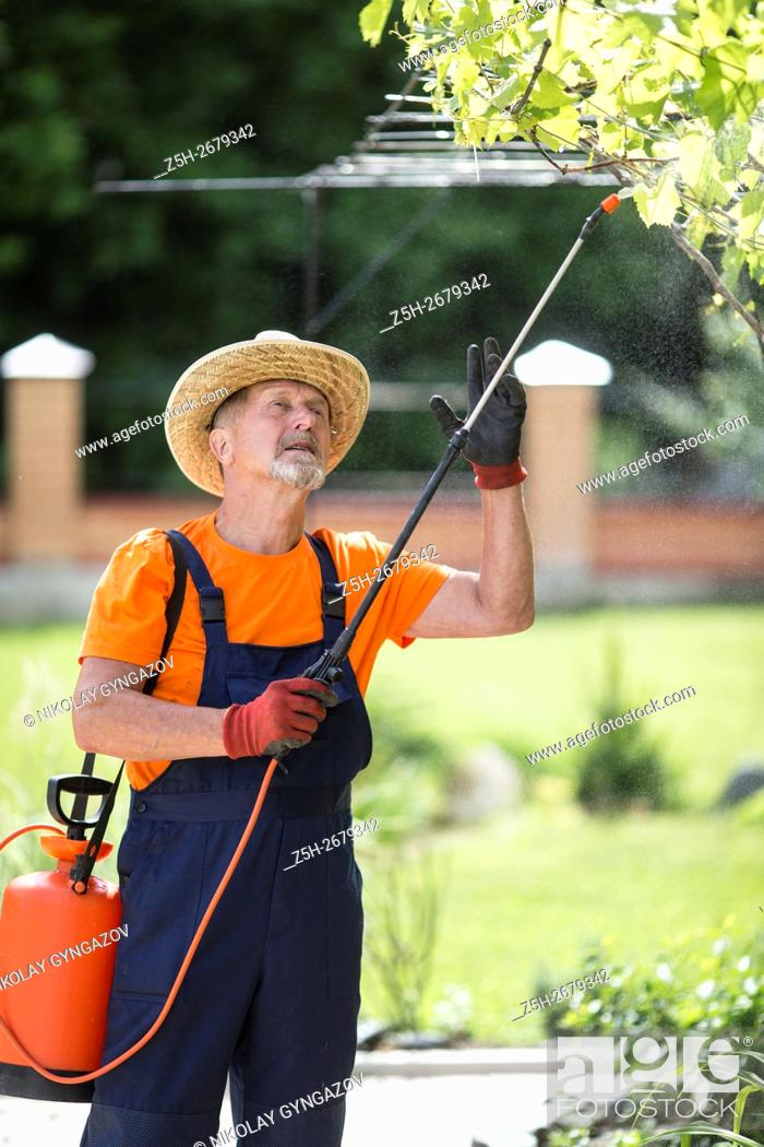 Stock Photo: Russia. Belgorod region. Elderly man working in the garden. Processing of trees from pests.