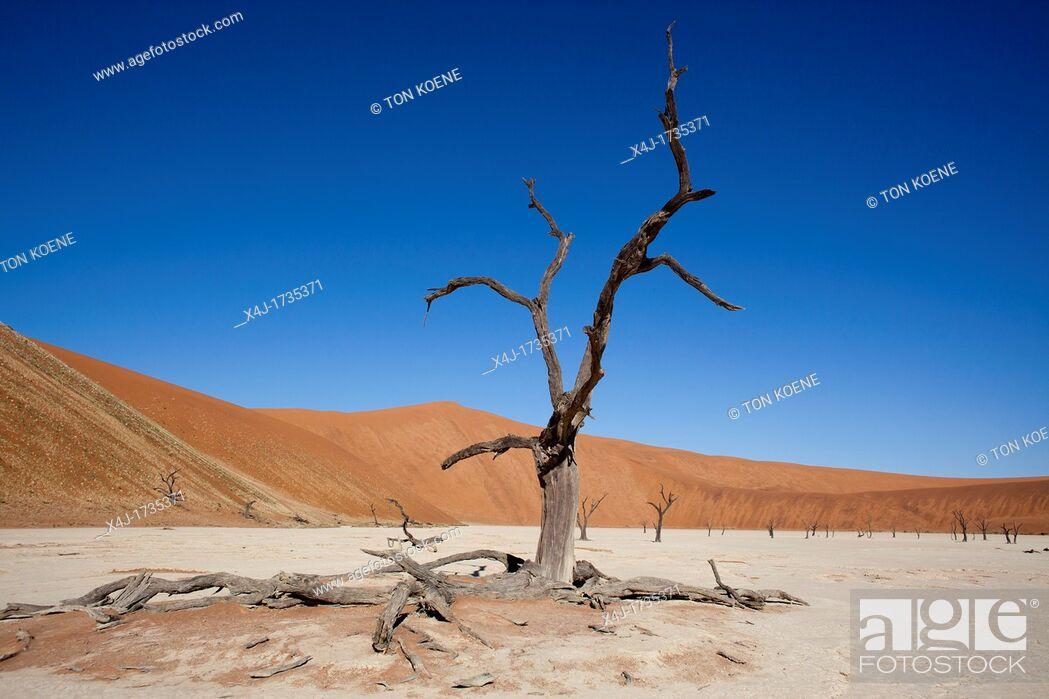 Stock Photo: sossusvlei dead valley in Namib-Naukluft Park, Namibia.