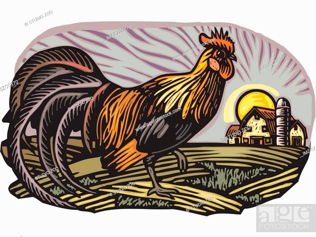 Stock Photo: Rooster with barn in the background.