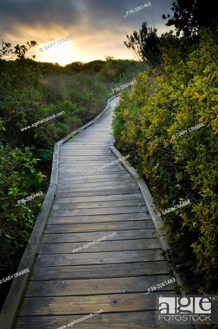 Stock Photo: Wooden Boardwalk path walking trail through Elfin Forest Natural Area at sunset, Los Osos, California.