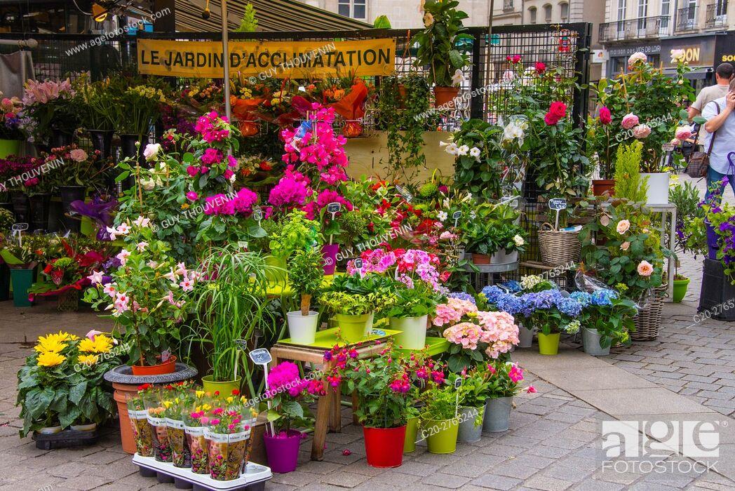 Stock Photo: Flower shop, Nantes, Loire Atlantique, France.