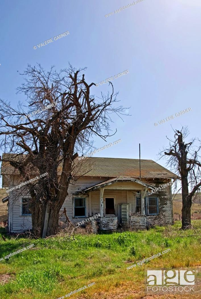 Stock Photo: his image shows an old abandoned white homestead house in the springtime with dramatic old twisted trees growing up on either side Taken near Washtunca in Adams.
