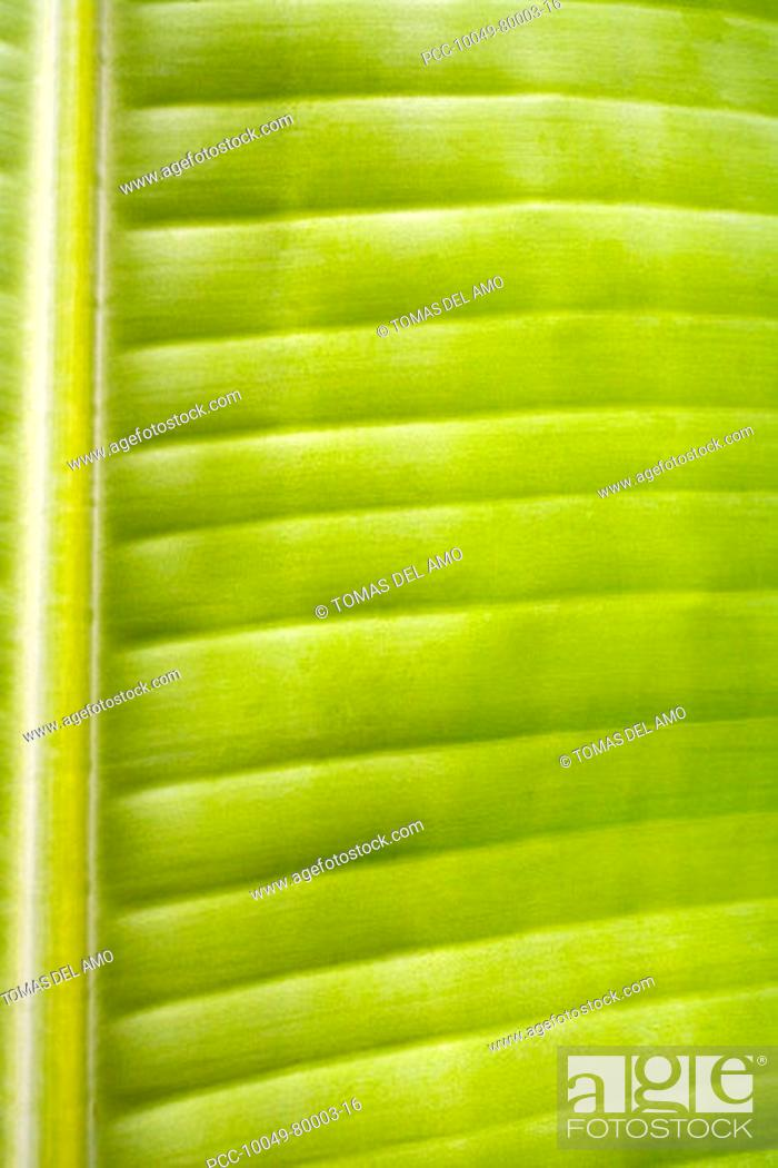 Stock Photo: Close-up of a green leaf, stem and veins create a pattern.