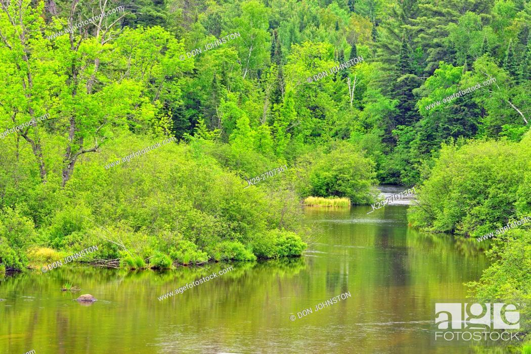 Stock Photo: Namekagon River shoreline, St. Croix National Scenic Riverway, Wisconsin Minnesota state line, USA.
