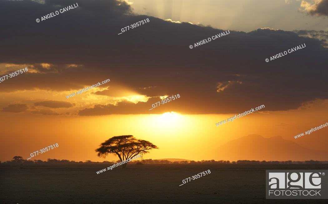 Stock Photo: Kenya. Amboseli National Park.