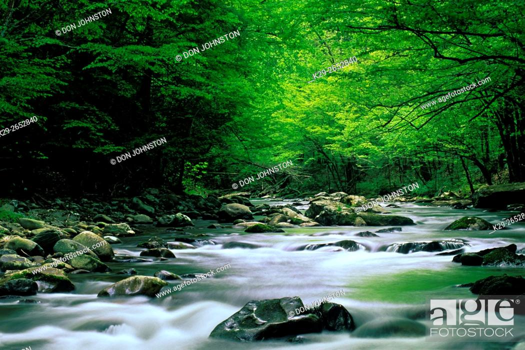 Stock Photo: Spring foliage overhanging rapids in Middle Prong of Little River, Great Smoky Mountains National Park, Tennessee, USA.