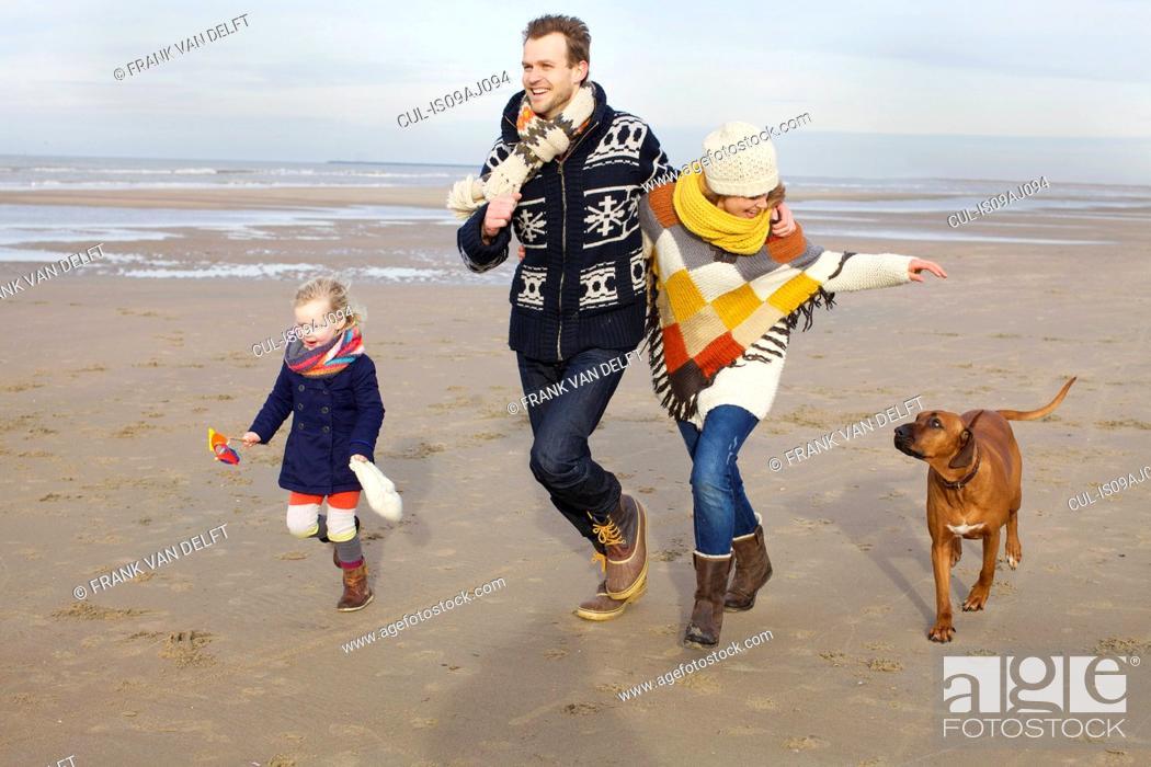 Stock Photo: Mid adult parents, daughter and dog running on beach, Bloemendaal aan Zee, Netherlands.