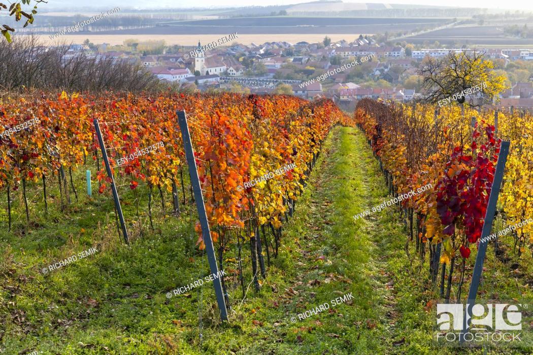 Stock Photo: Autumn vineyards in Blatnice pod Svatym Antoninkem, Southern Moravia, Czech Republic.