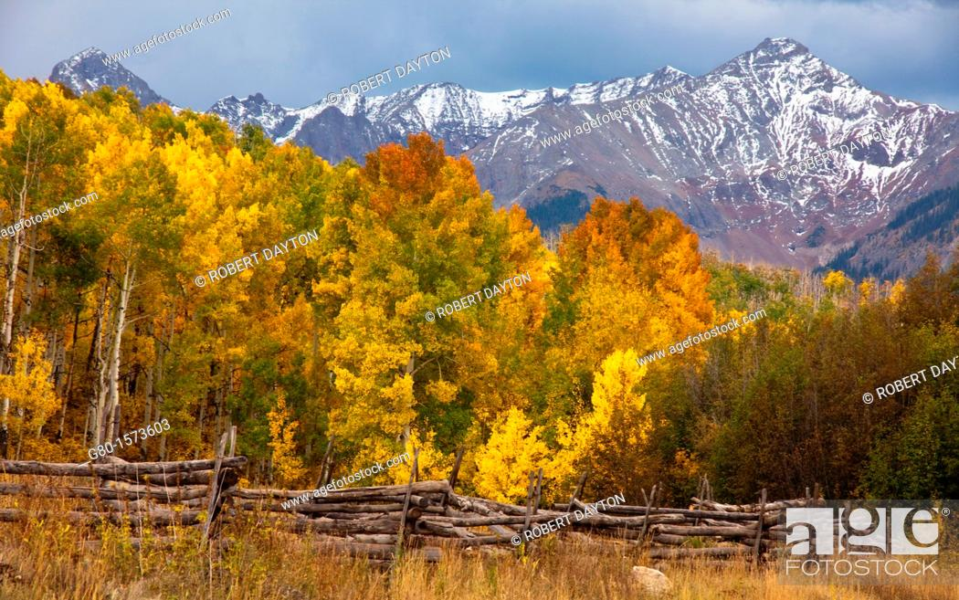 Stock Photo: Aspens peaking in the San Juan Mountains of Colorado.