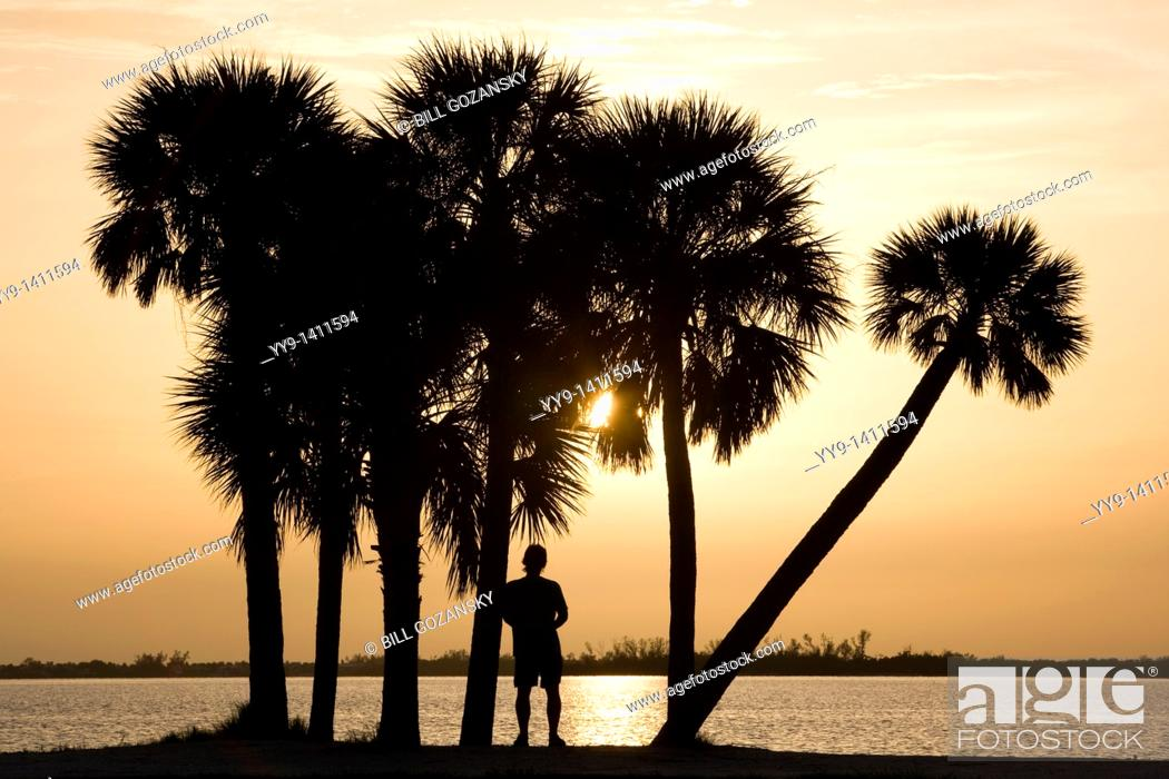 Stock Photo: Palm Trees at Sunset - Sanibel Island Causeway - Sanibel Island, Florida.