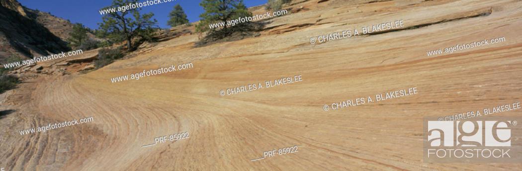Stock Photo: Navajo Sandstone Formation Zion National Park UT.