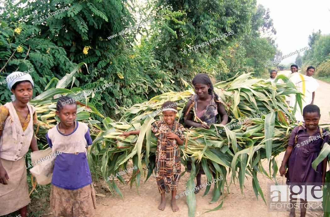 Stock Photo: Women and children carrying large bundles of sugar cane along road.