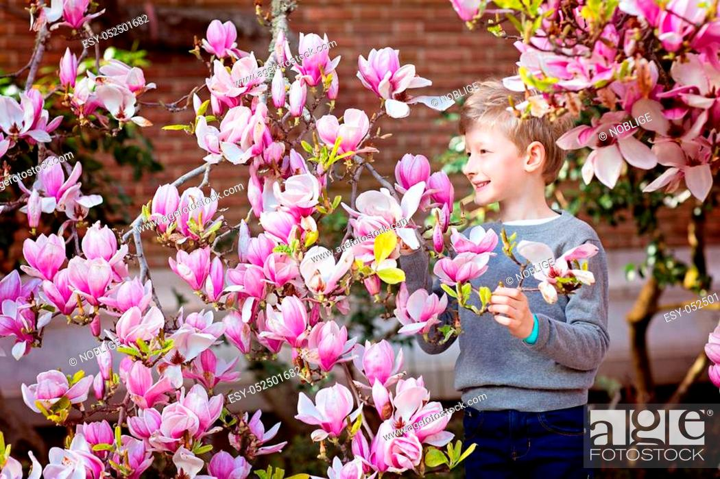 Stock Photo: beautiful smiling boy enjoying spring time and gorgeous blooming magnolia tree.