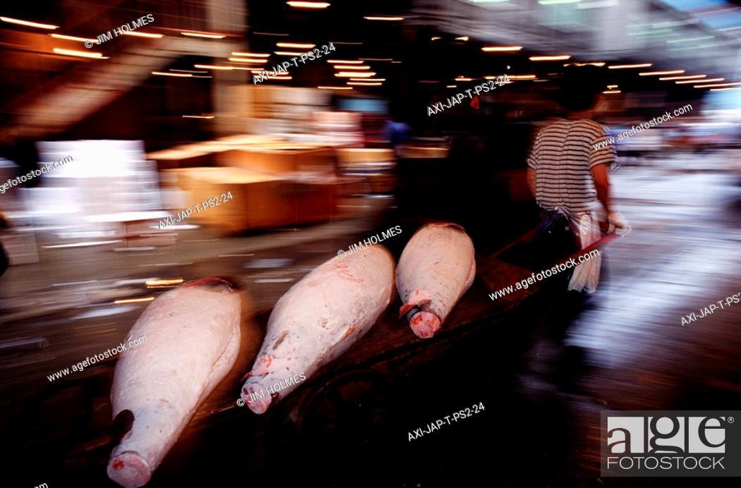 Stock Photo: Moving frozen Tuna fish after auction at Tsukiji Fish market.