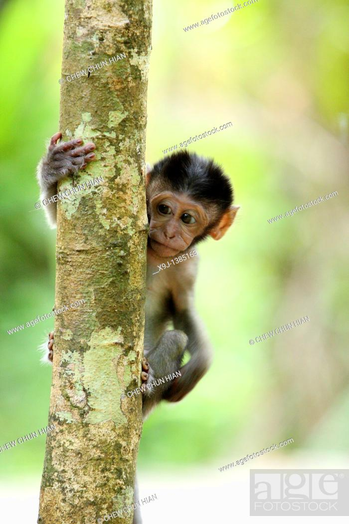 Stock Photo: Baby Monkey.