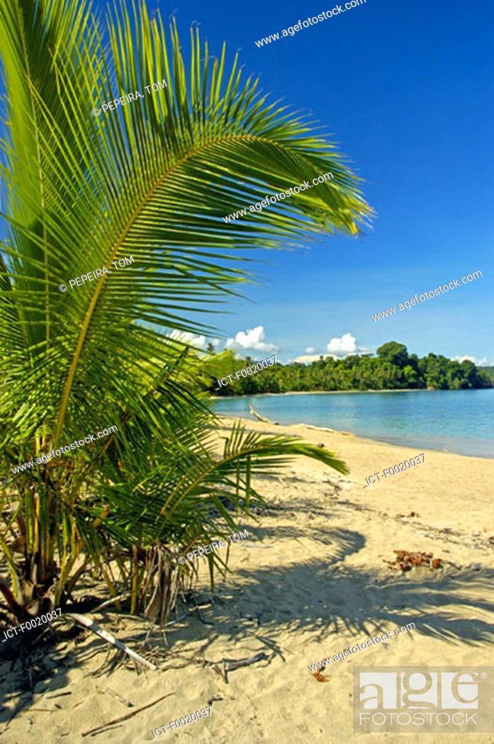 Stock Photo: Costa Rica, Caribbean coast, beach.