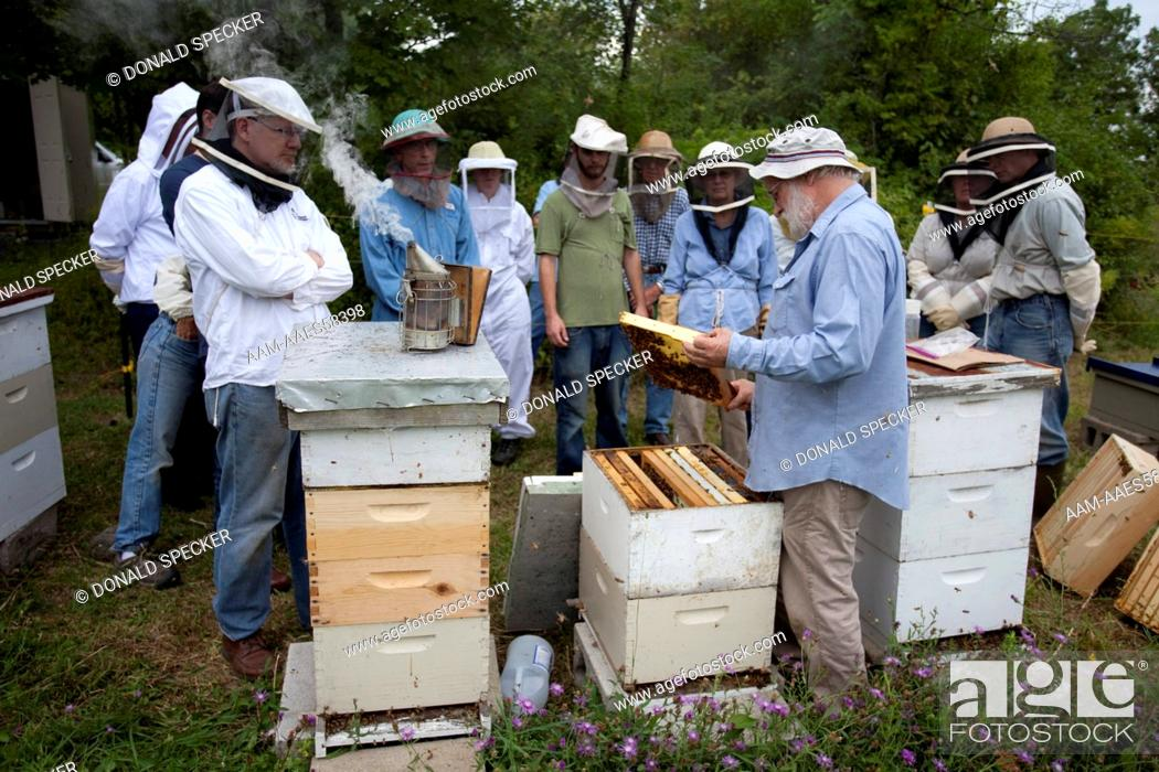 Stock Photo: Bee club members learning about colony management Finger Lakes region, NY.