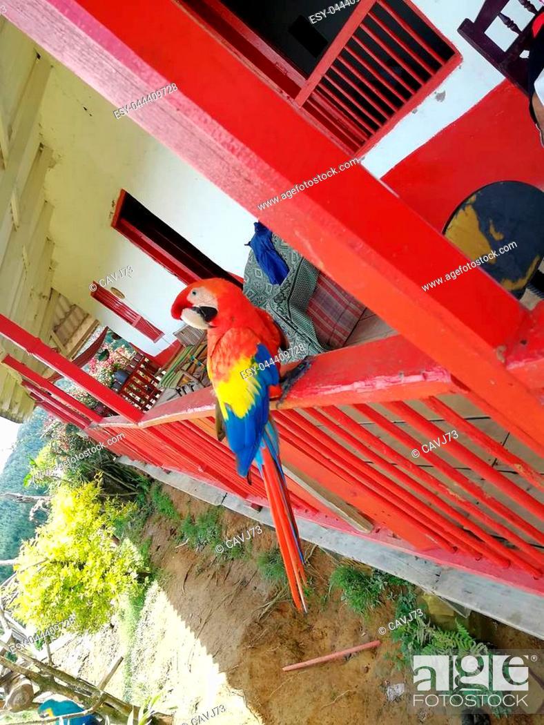 Imagen: Guacamaya tricolor parte y s?mbolo de la cultura colombiana.