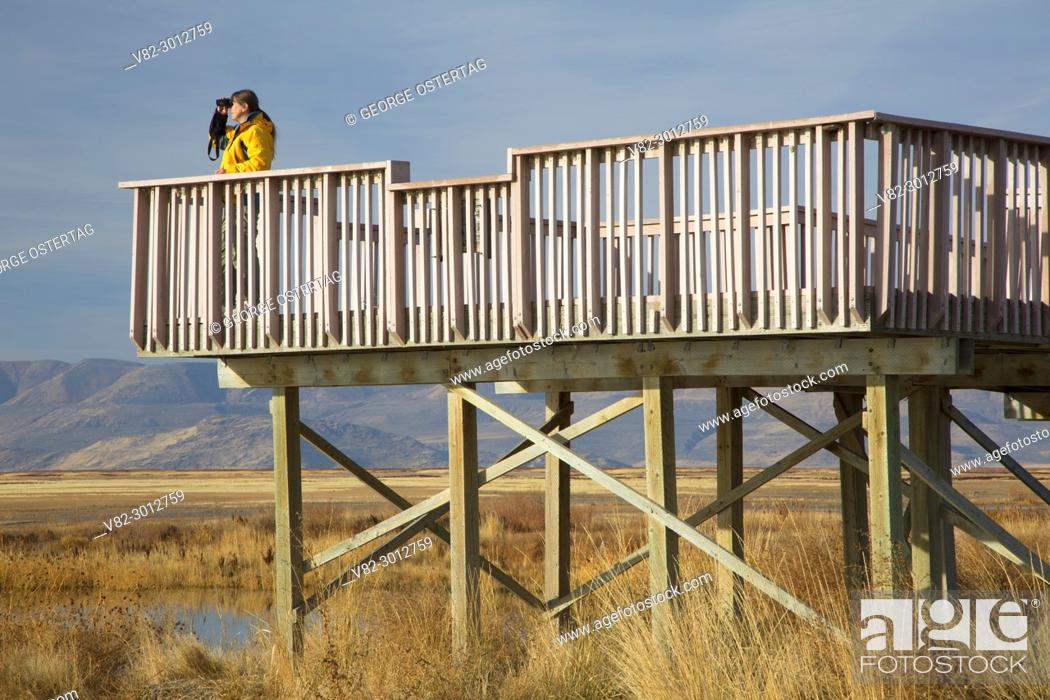 Photo de stock: Birding from observation deck, Bear River Migratory Bird Refuge, Utah.
