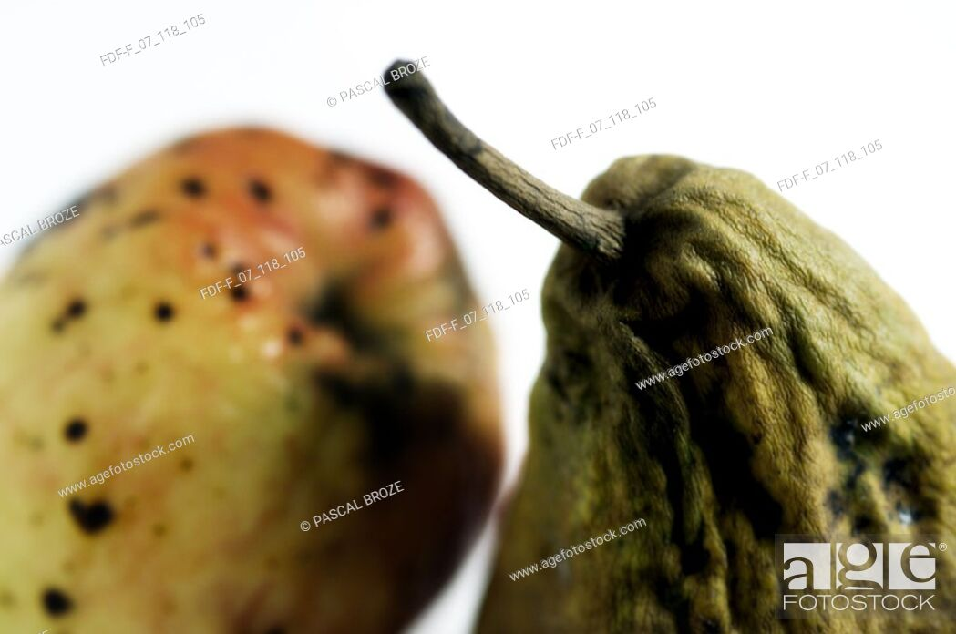 Stock Photo: Close-up of a rotten apple and a pear.