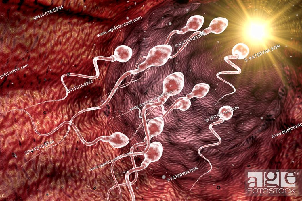 Stock Photo: Computer illustration of a sperm cell, or spermatozoa. This is the male sex cell. It is produced in the testes and is responsible for fertilisation of the.