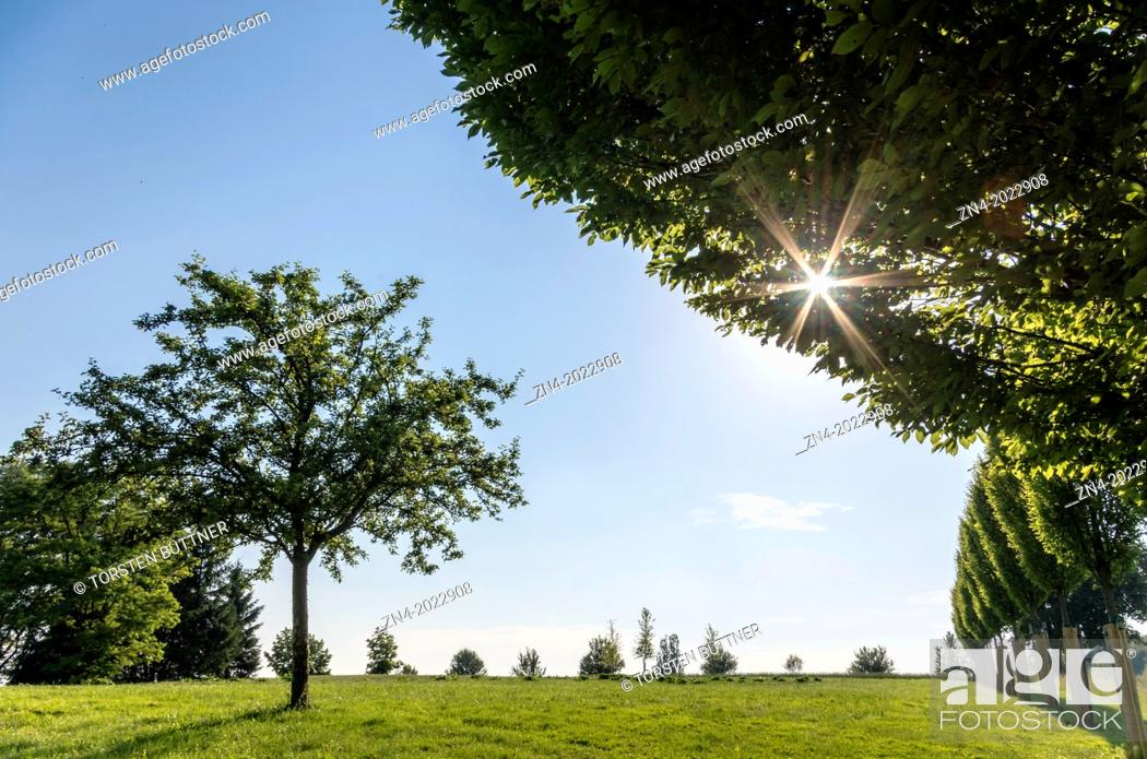 Stock Photo: Single Tree and Sinking Sun on Magdalena Hill, Bad Schallerbach, Austria.