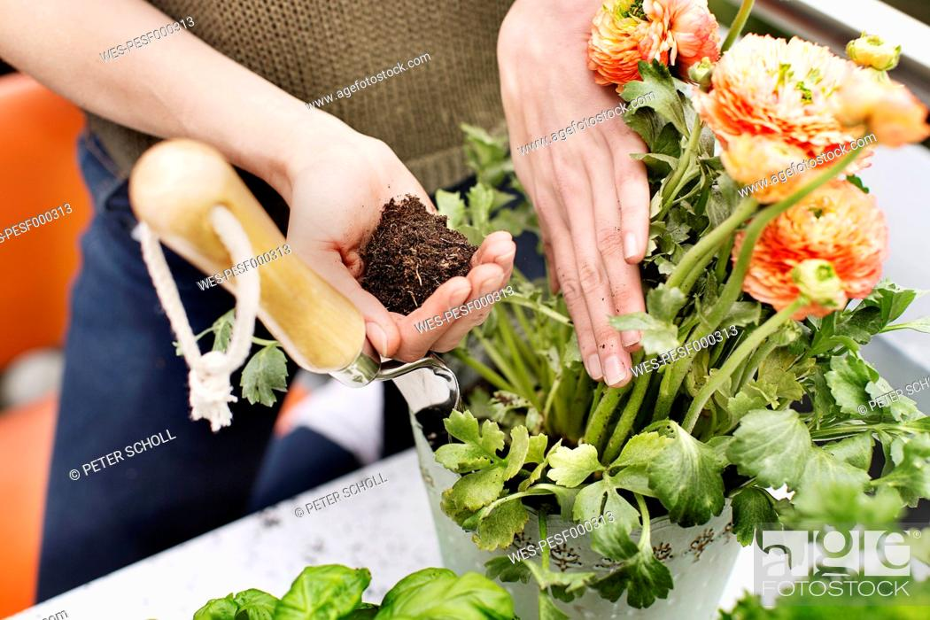 Stock Photo: Woman planting flower.