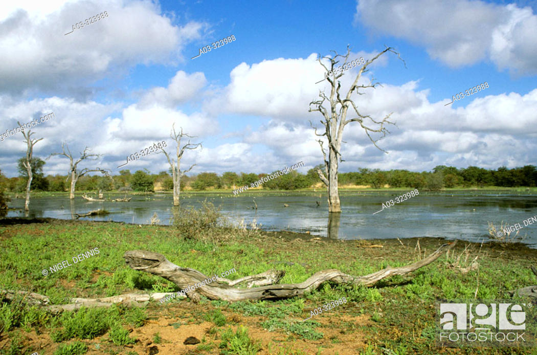Stock Photo: Kruger National Park, Rooibsrand dam, South Africa.