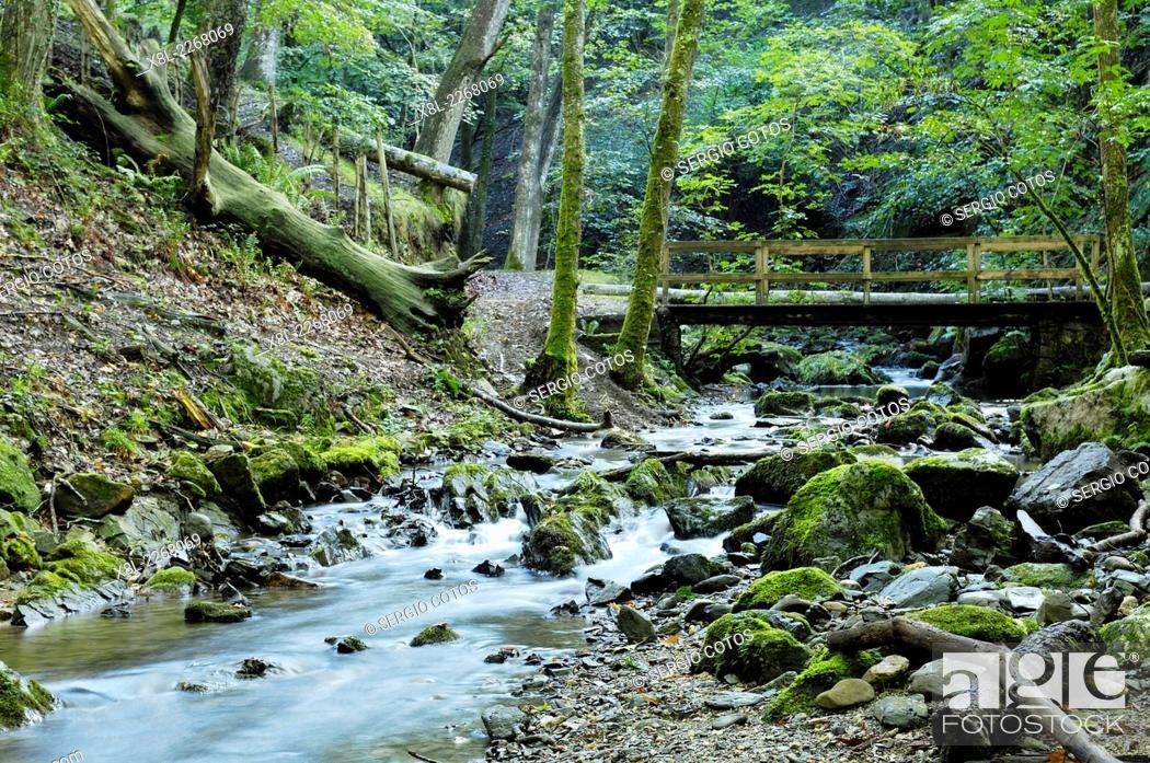 Stock Photo: river in Artikutza.
