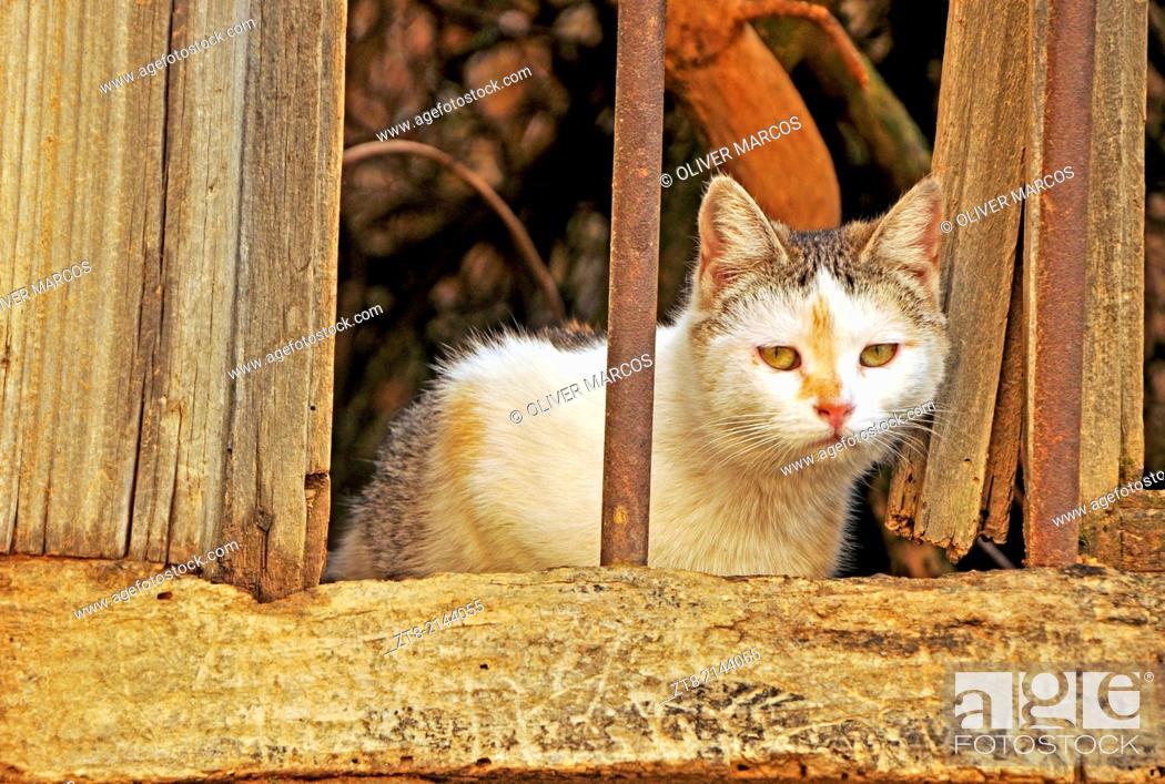 Imagen: Cat in abandoned village, Leon province, Castilla-Leon, Spain.
