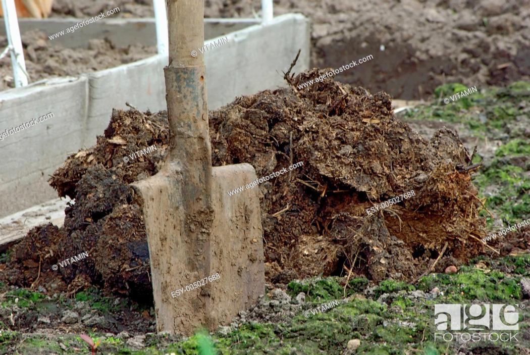 Stock Photo: A pile of manure and shovel.