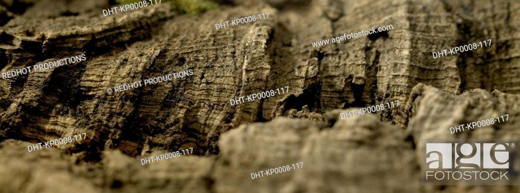 Stock Photo: Tree Bark close up.