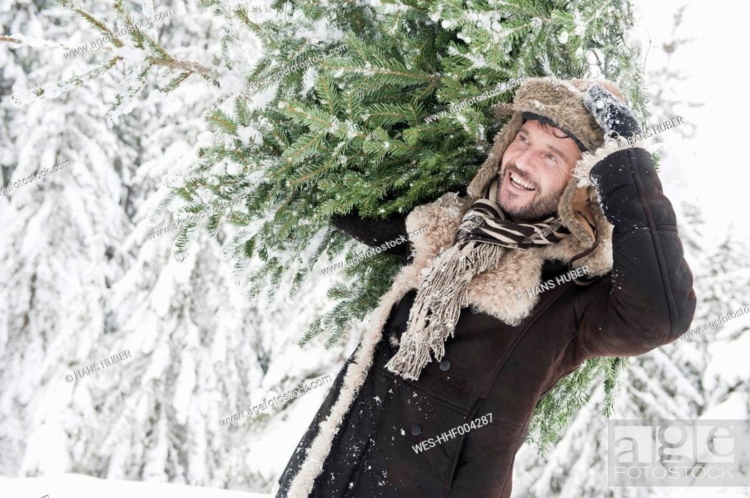 Stock Photo: Austria, Salzburg County, Mature man carrying christmas tree, smiling.