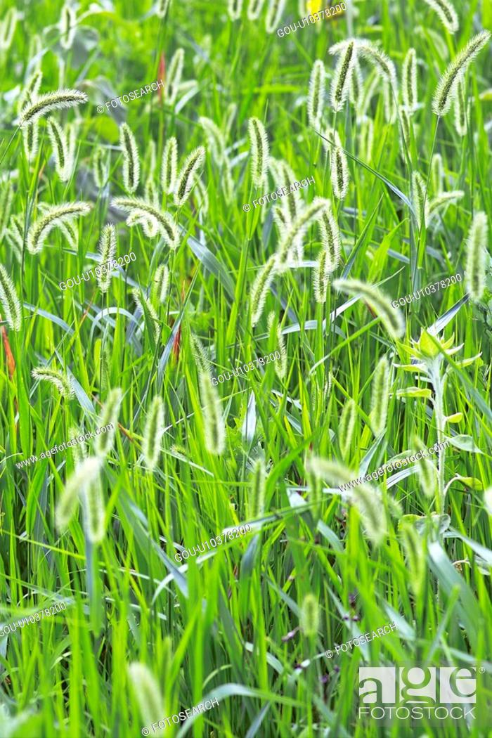 Stock Photo: Grass field.