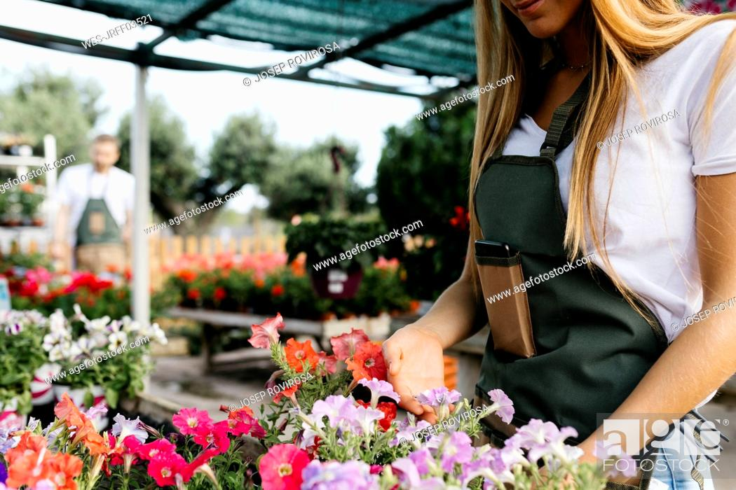 Stock Photo: Close-up of female worker in a garden center caring for flowers.