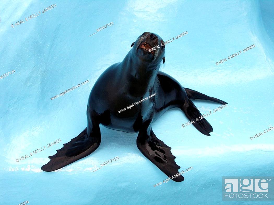 Stock Photo: Seal.