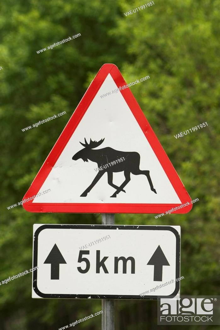 Stock Photo: Arrows, Fixed, Direction, Sign Board, Animal.
