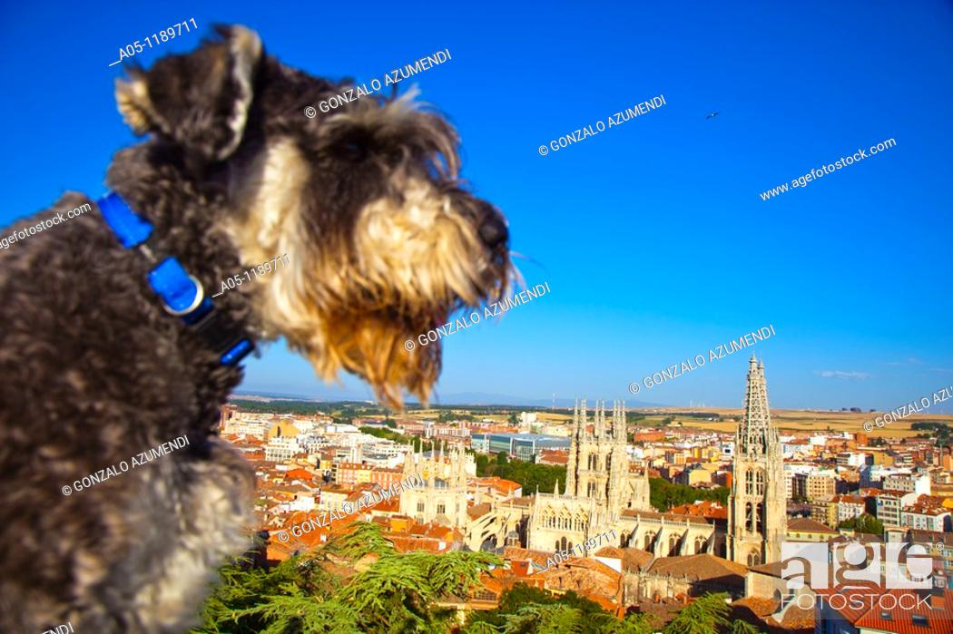 Stock Photo: Panoramic view with the cathedral. Burgos. Castilla-Leon. Spain.