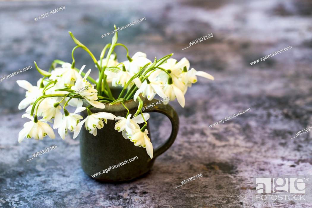 Stock Photo: High angle close up of bunch of snowdrops in small jug on textured grey surface.