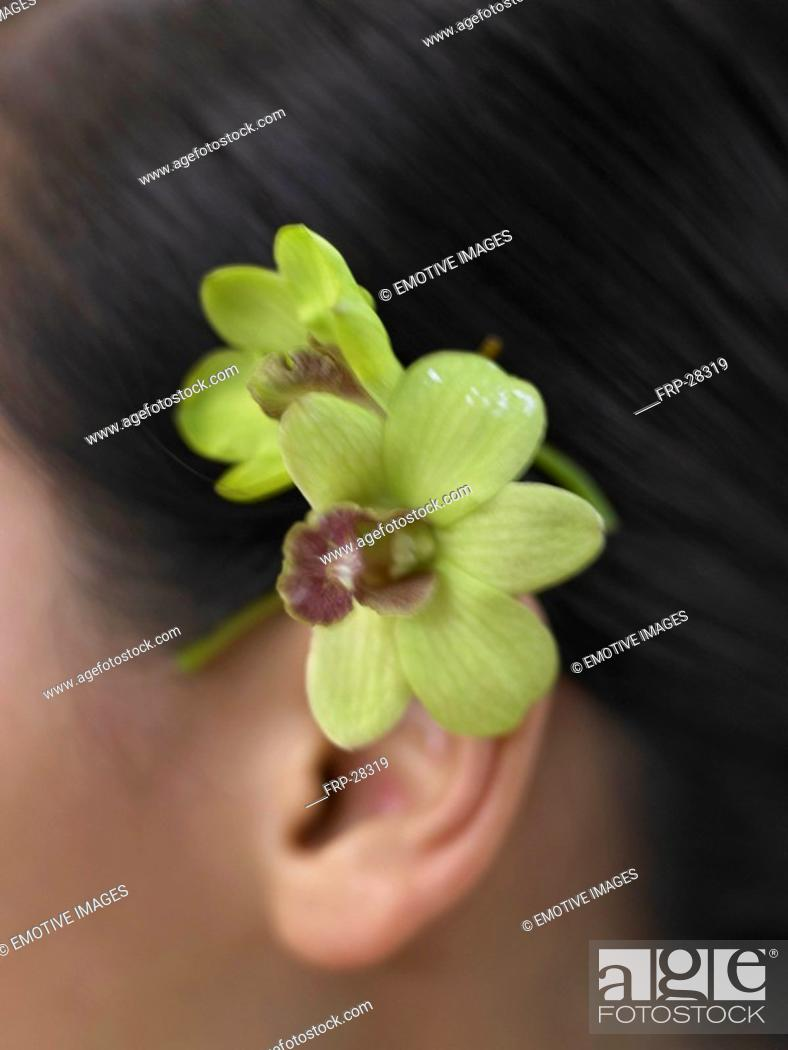 Stock Photo: orchid blossom behind the ear.