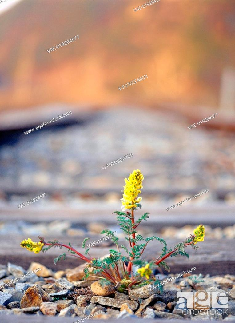 Stock Photo: plant, railroad, nature, spring, season, film.