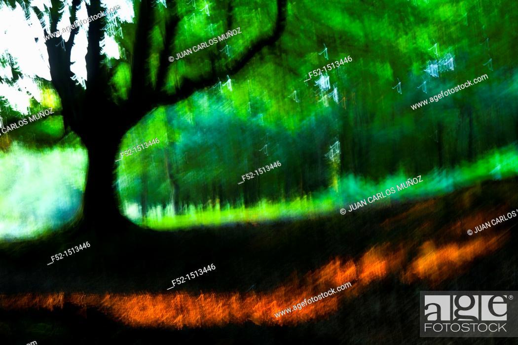 Stock Photo: Otzarreta beech forest, Gorbeia Natural Park, Bizkaia, Basque Country, Spain.