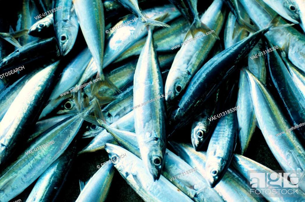 Stock Photo: Stacks Of Fish.