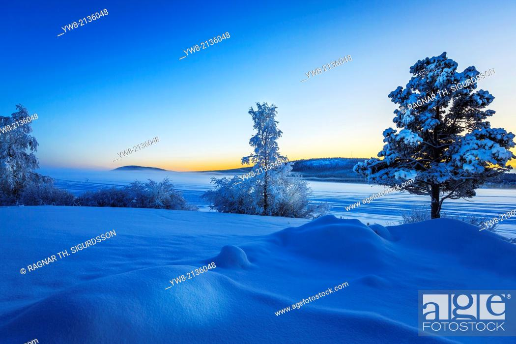 Stock Photo: Snow covered trees in extreme cold temperatures, Lapland, Sweden.